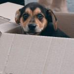dog-in-box